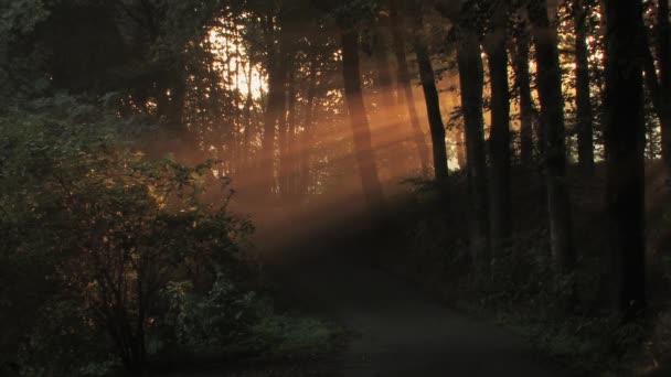 ranní slunce