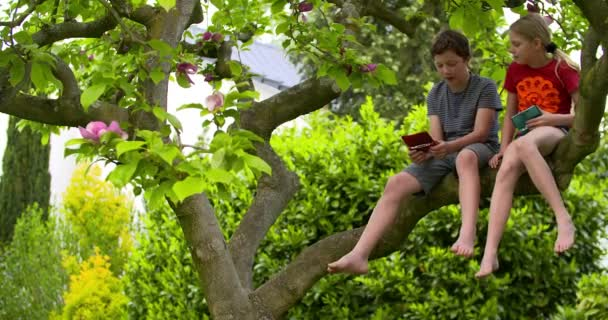 Boy and girl on tree  playing games