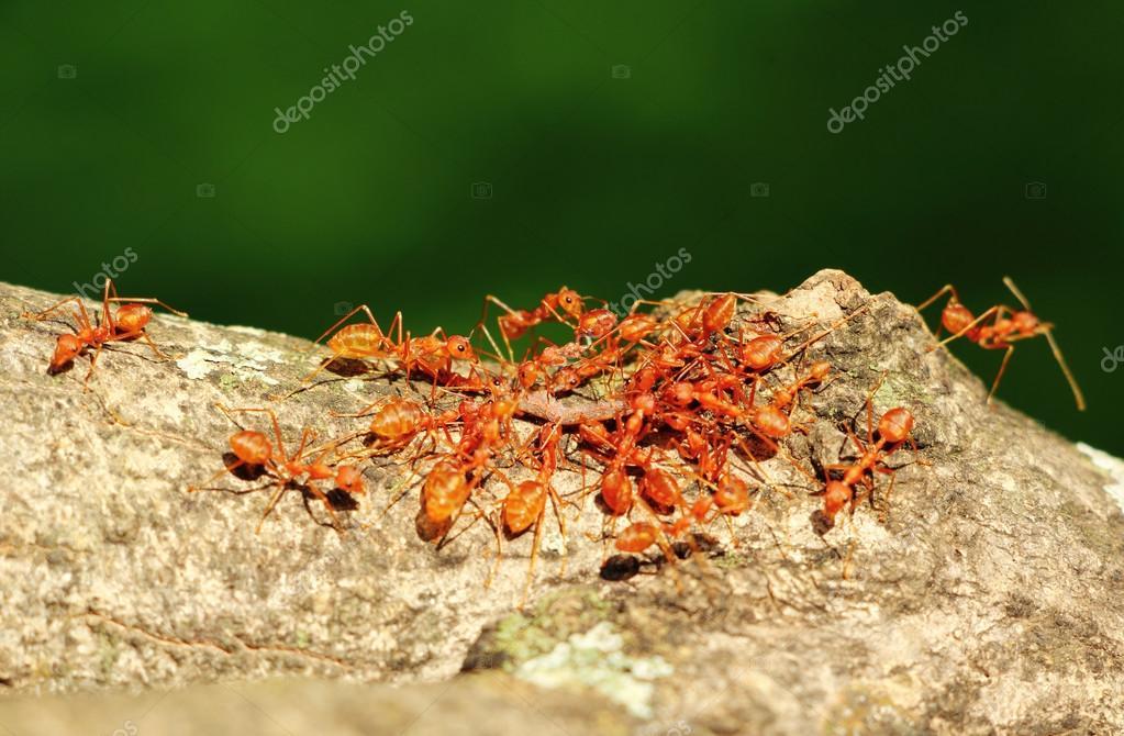 Ants inTeamwork