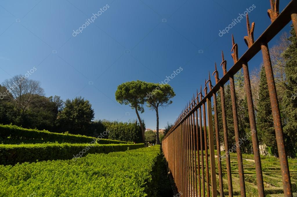 Rusty metal fence and trimmed bushes in Boboli Gardens, Florence