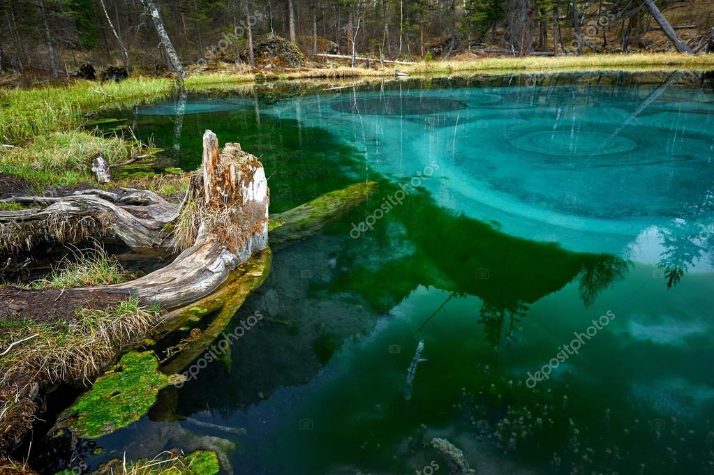 Sceenery of wild Siberian forest - taiga