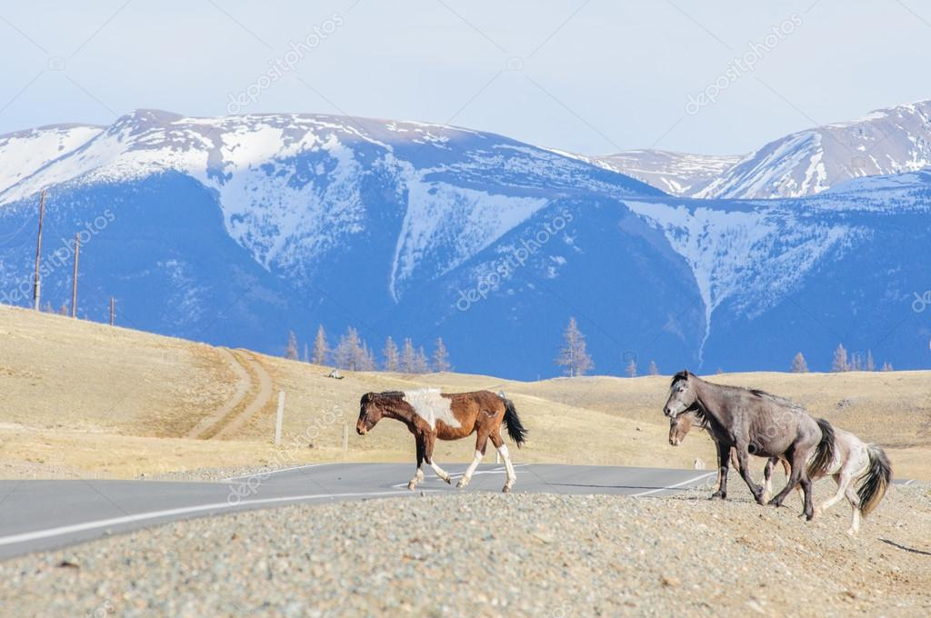 Hot summer day landscape in Altai