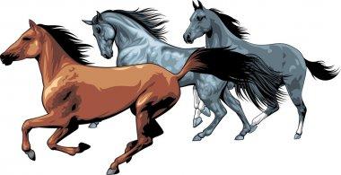 A herd of Horses stock vector