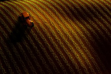 Aerial view of field with rows of growing crop or vegetables and tractor ploughing it. Sunset or sunrise light