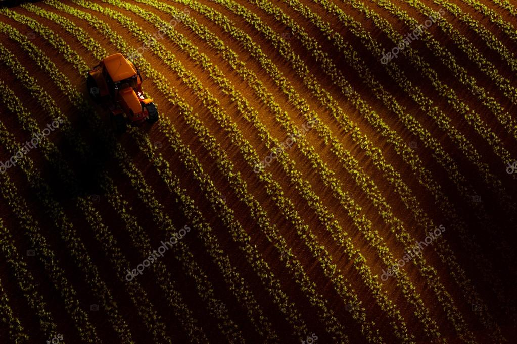 aerial view of field with rows of growing crop or