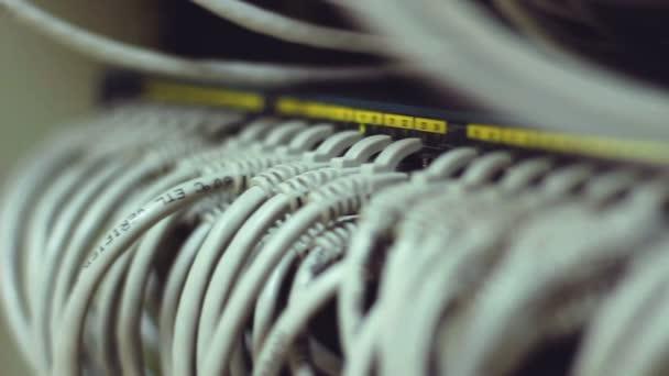 Internetkabel in Netzwerkknoten verbunden.