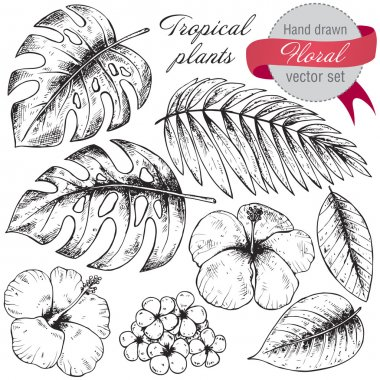 Set of black and white hand drawn graphic tropical plants