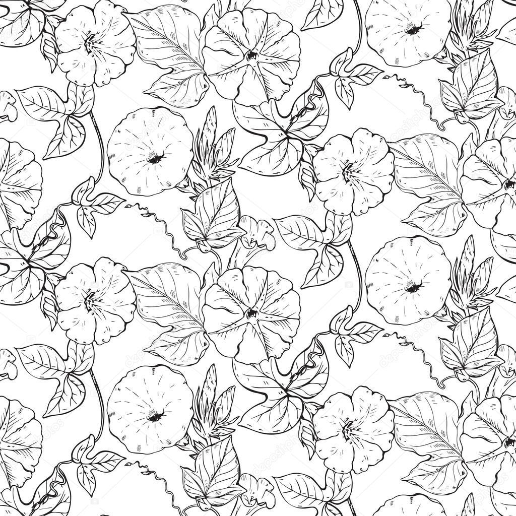 Dibujos Enredaderas En Blanco Y Negro Patrón Transparente