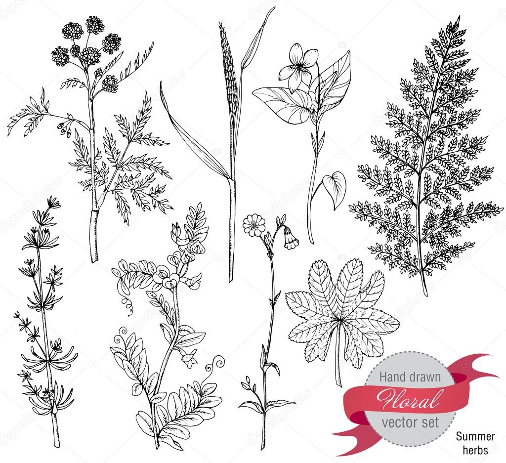 Set of herbs and flowers, hand drawn vector illustration.