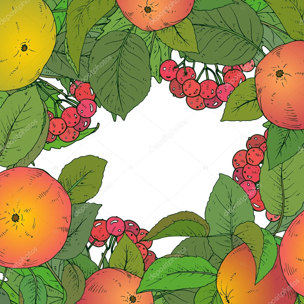 Vector template with  hand drawn apple branches and guelder rose