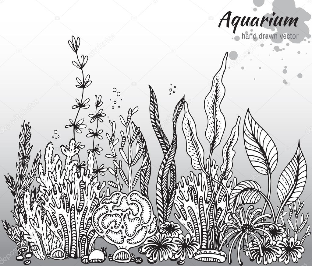 Vector monochrome hand drawn illustration with aquarium algae