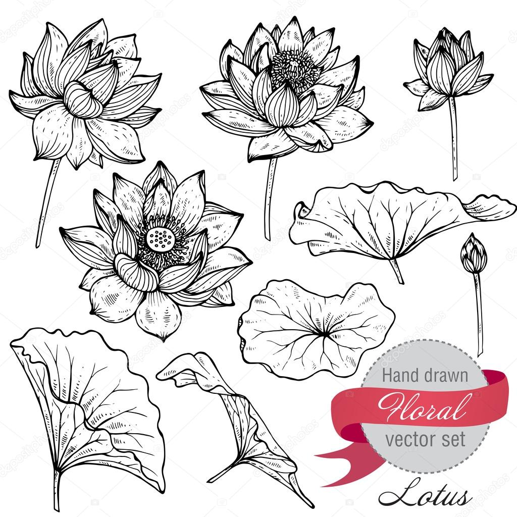 Vector set of hand drawn lotus flowers and leaves.