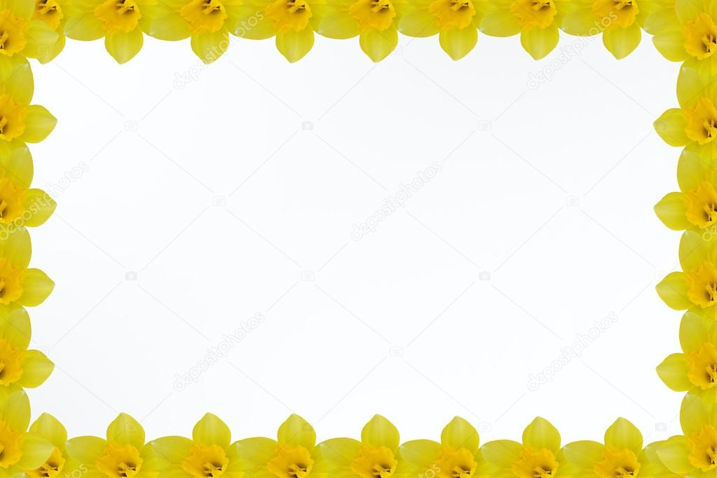 frame of yellow daffodils in the corners on a white background
