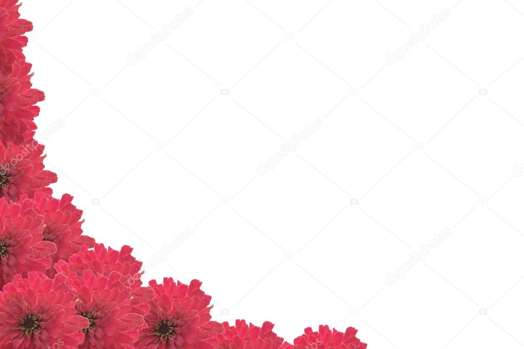 frame of pink flowers on a white background