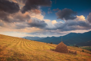 Carpathian autumn meadow