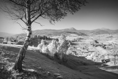 Carpathian village in a spring valley with lonely birch tree on a hill. Highest mountains of Ukraine Hoverla and Petros on a skyline. Black and white stock vector