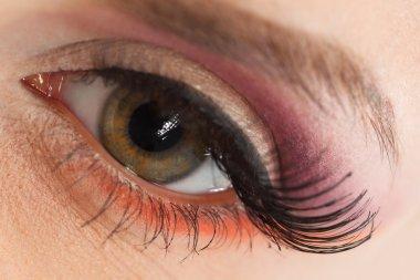 Macro of Beautiful Female eye with Makeup stock vector