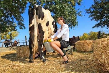 Businesswoman milking cow
