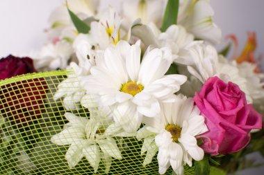 Very beautiful  flowers