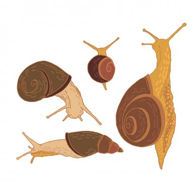 seamless pattern with garden snails