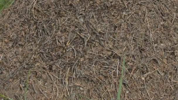 mravence a mraveniště