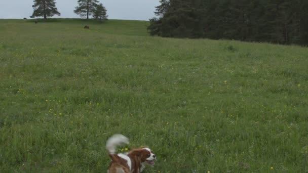 Výuka psa, aby přinesl hračky