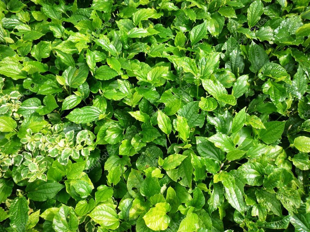 Wunderbar Grüne Pflanzen Beste Wahl Grüne — Stockfoto