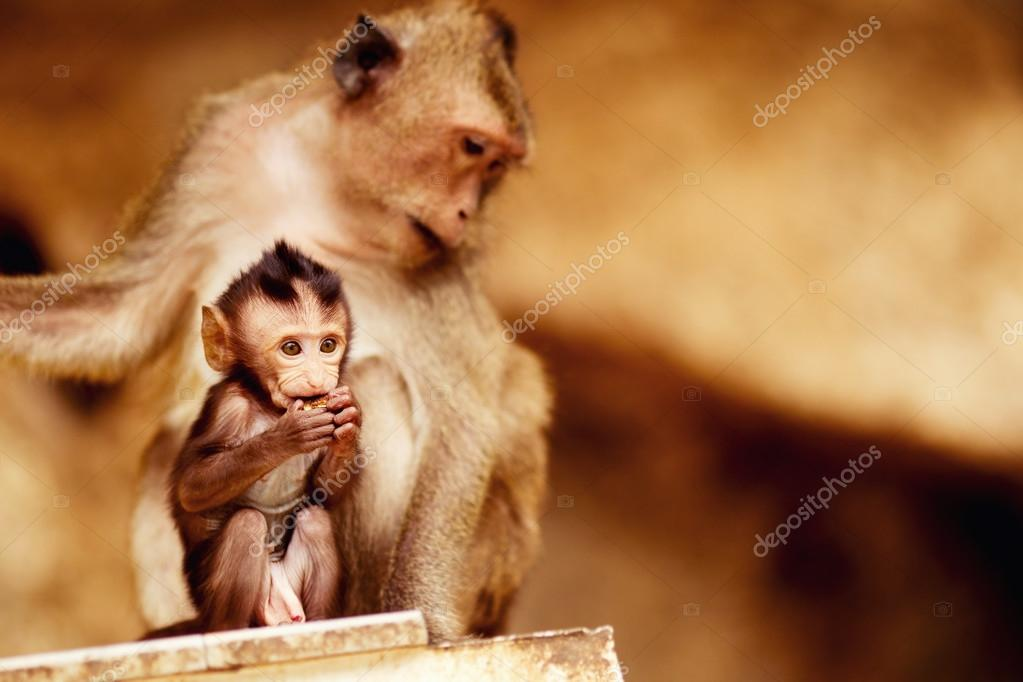 Family of macaques - child and mom are sitting in asian temple at yellow wall background.