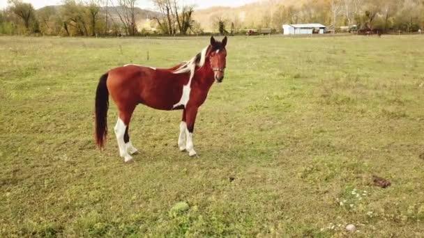 Kůň stojí na poli. volná pastva spárkatých zvířat na pastvinách.