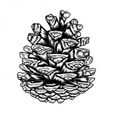hand-drawn pine cone