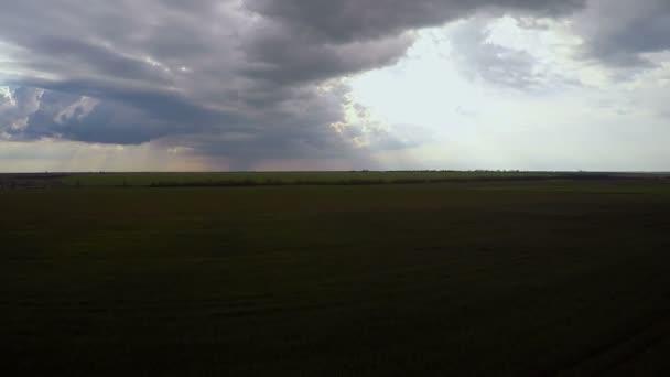 Létání nad stádem krav pasoucích se v zeleném poli. Letní den. Mraky na modré oblohy a zelené trávy