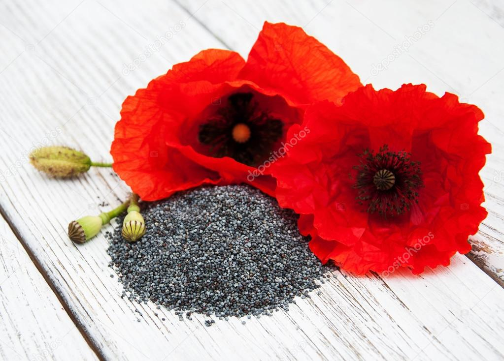 Poppy seeds and flowers stock photo almaje 113445264 poppy seeds and flowers stock photo mightylinksfo