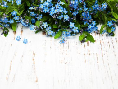 Forget-me-nots flowers