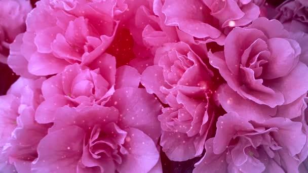 Krásné růžové květy okvětní lístky třpytky animace