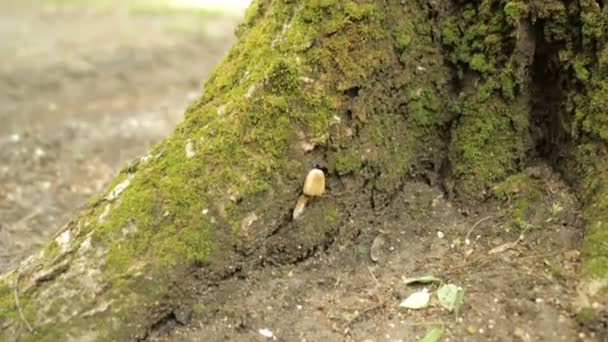 Houby na strom pokrytý mechem