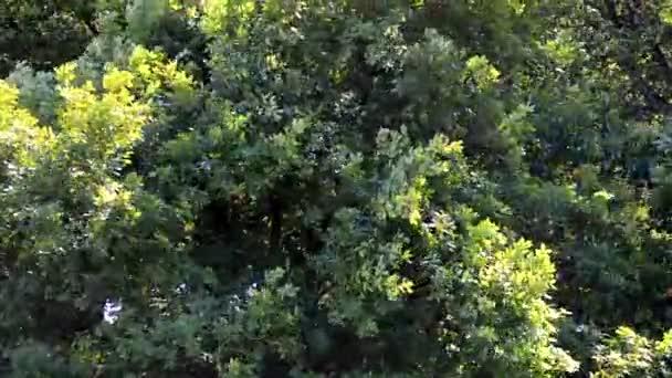 Halad a szél a fák koronája