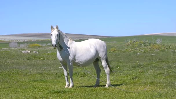 White horse in the countryside