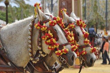 Horses decked in fair, Jerez de la Frontera