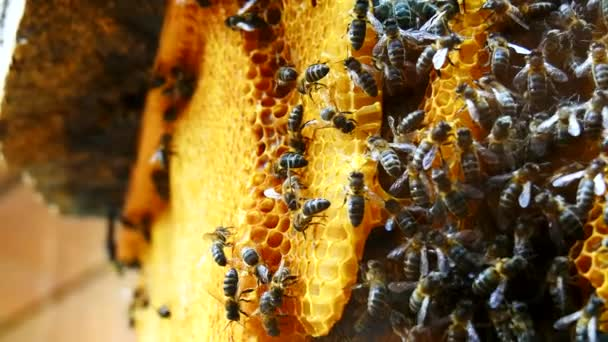 Working bees on honeycomb (4K)