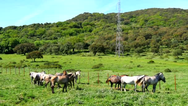 Herd of horses in a meadow, wild life