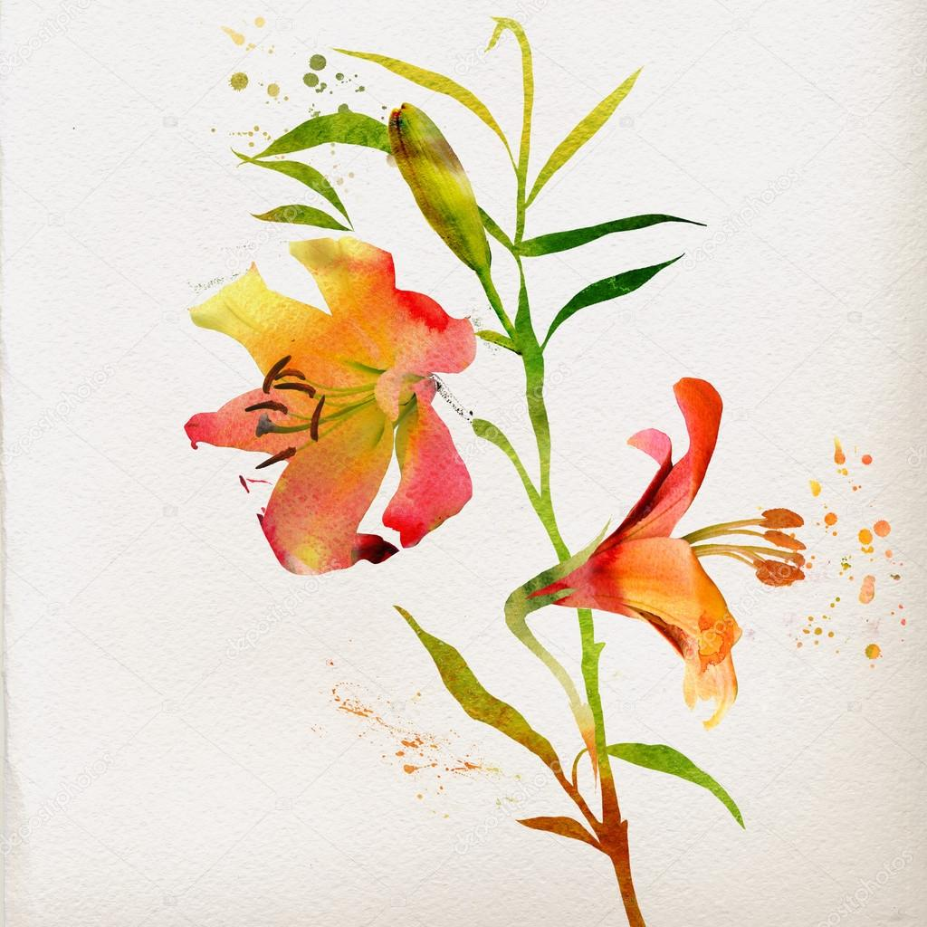 Watercolor lily flowers