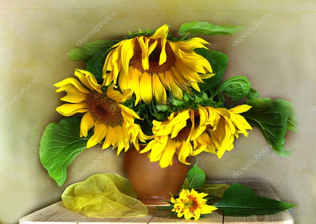 Sunflower and veil .