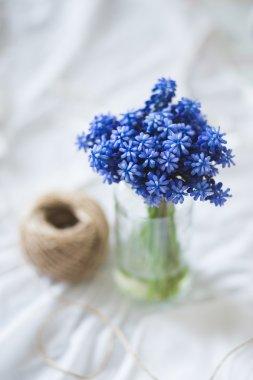 Wonderful blue spring flowers photography
