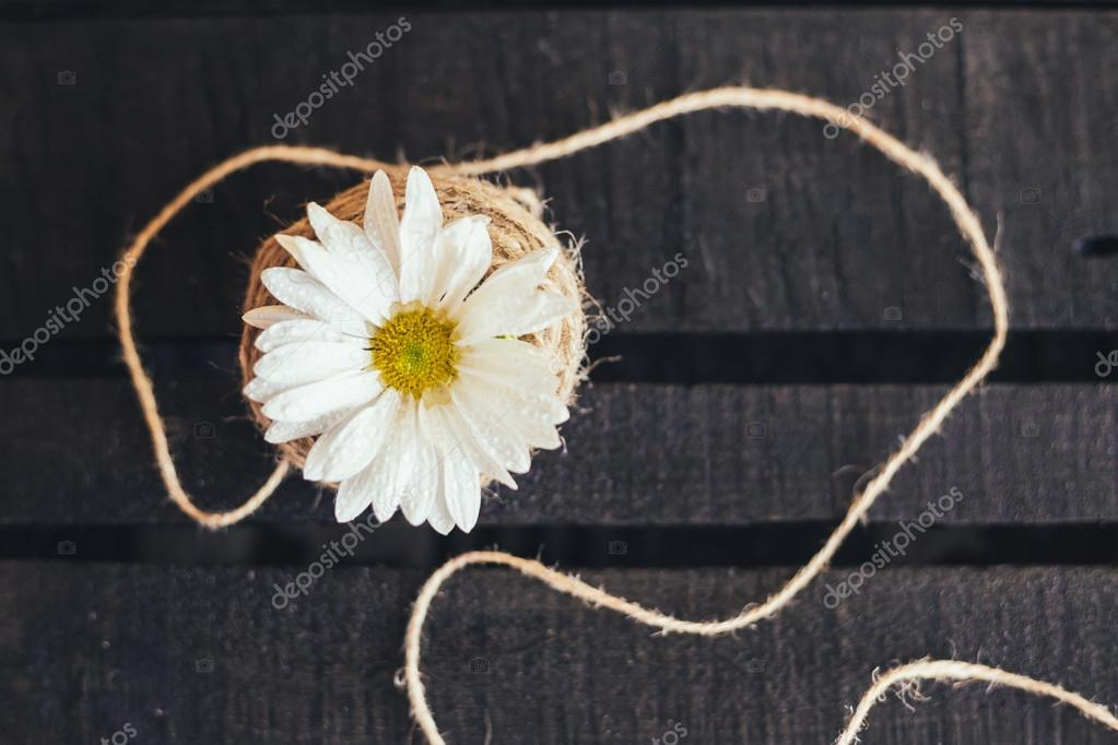 Single flower on a black background