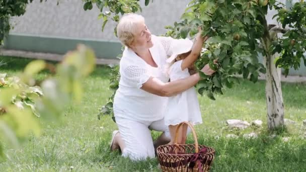 Grandmother and granddaughter picking apple from tree in sunny garden