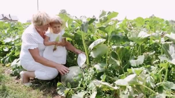 Grandmother and granddaughter are sitting on a green farm plantation