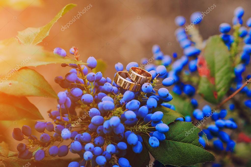 wedding rings HD