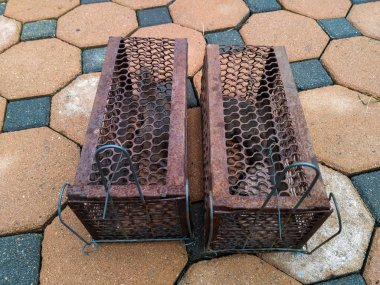 Rat in Cage Trap , Deal Rats and Mice by Your Self in Your Home