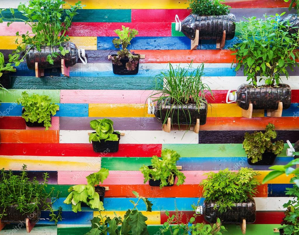 Organic vegetable garden.