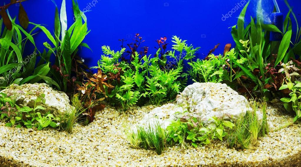 Inrichting van de prachtige tropische beplante zoetwater aquariu  u2014 Stockfoto  u00a9 subinpumsom #65131295
